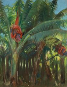 The Banana Forest, from the Canary Collection